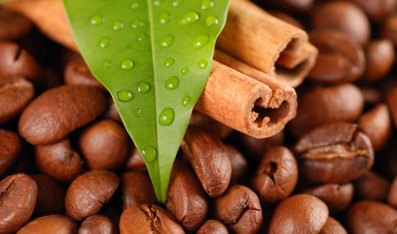 coffee, зерна, cinnamon, высокого, взгляд, разрешения,