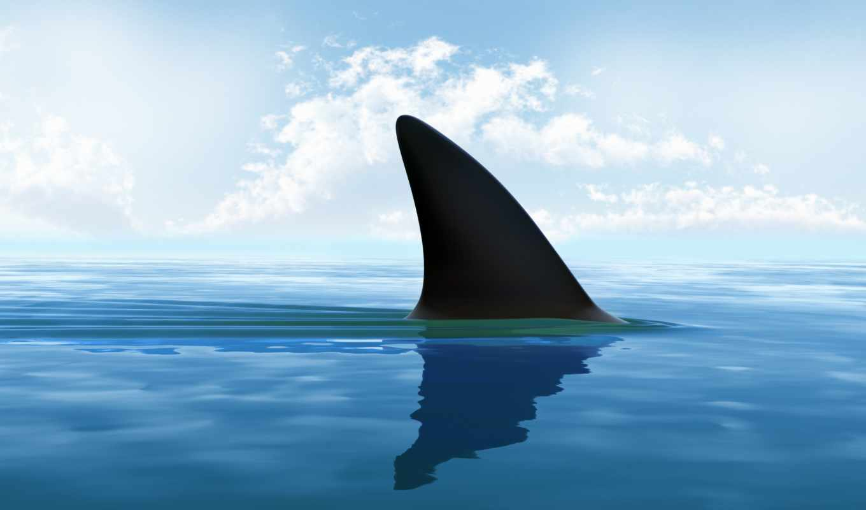 акулы, fin, акула, море, ребра, акул,