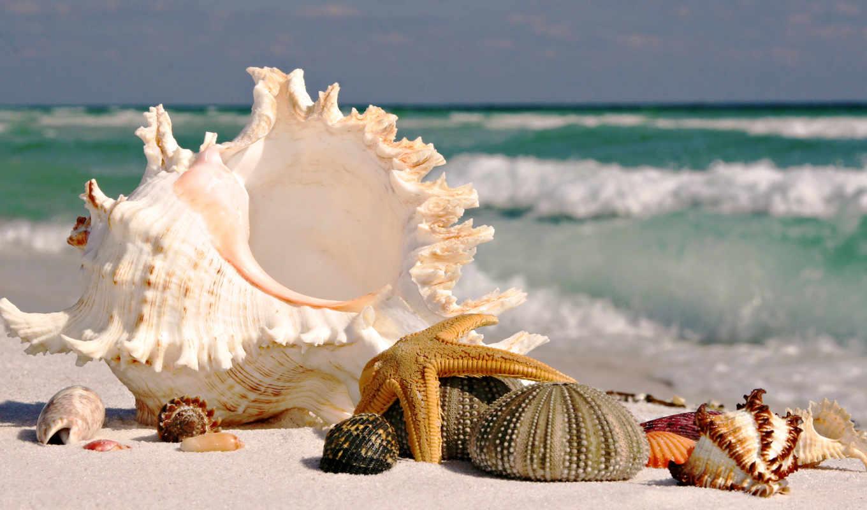 пляж, море, песок, ракушки, waves, мойка, surf, пляже, красивые,