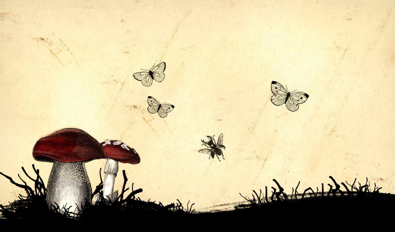 грибы, рисунок, насекомые, люблю, nature, desktop, собирать, кушать,