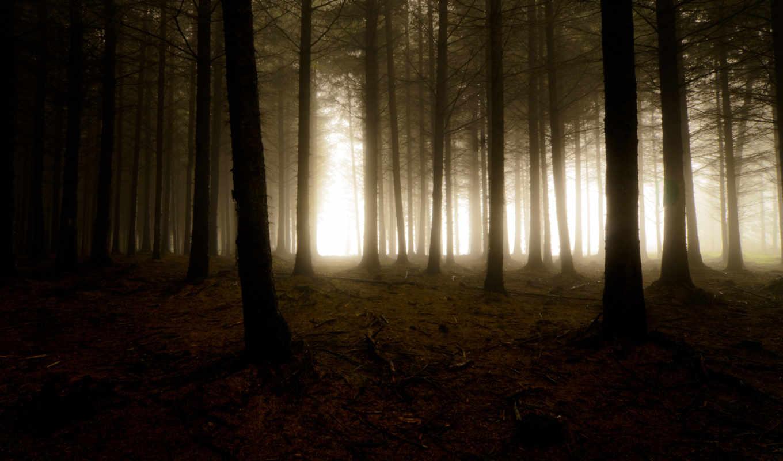 лес, деревья, мрак, дымка, туман, природа, свет,