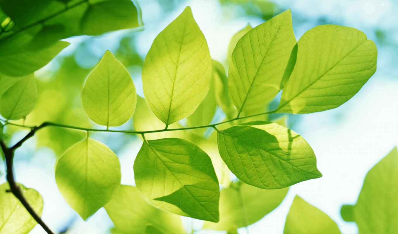 природа, весна, дерево, green, макро, красивые, весенние, листья, full,