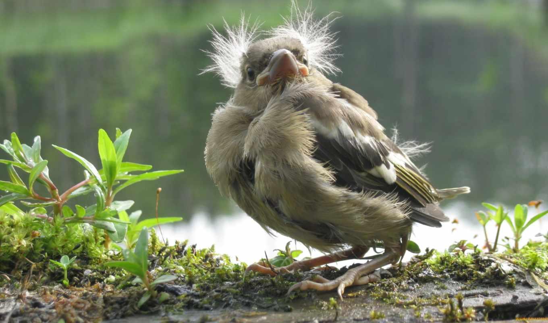 animals, нояб, nature, likeness, cool, click, birds,