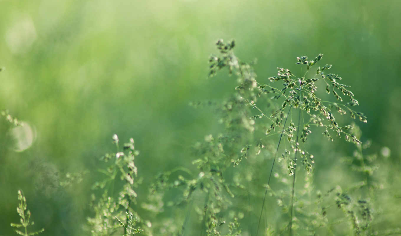 nature, descargar, brouiller, rose, lgumes, verts, gratis, hierba, mancha, naturaleza, roco, verduras, espiguillas, verde, vert, pillets, зелень, размытость, зеленые, роса, трава, колоски, ecran, herb