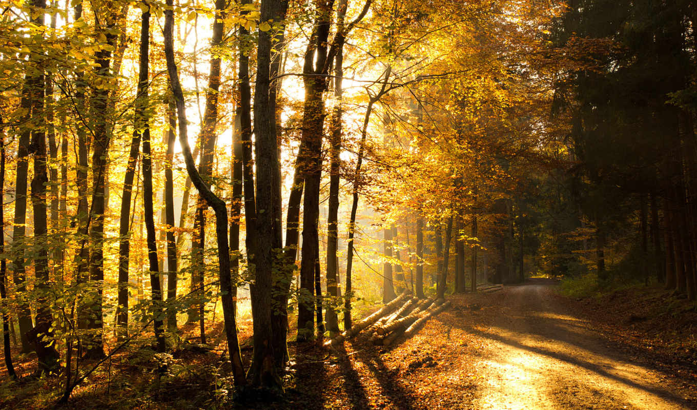 дорога, dana, каждому, svoya, осенней, осенняя, канвы, браслетах, озера, позолоченных, osen, просеки, незатейливой, жизнь, photoshop, лесу,