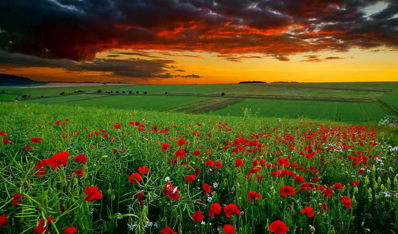 поле, маки, ромашки, закат, маковое, oblaka, цветы, красные, tochka,