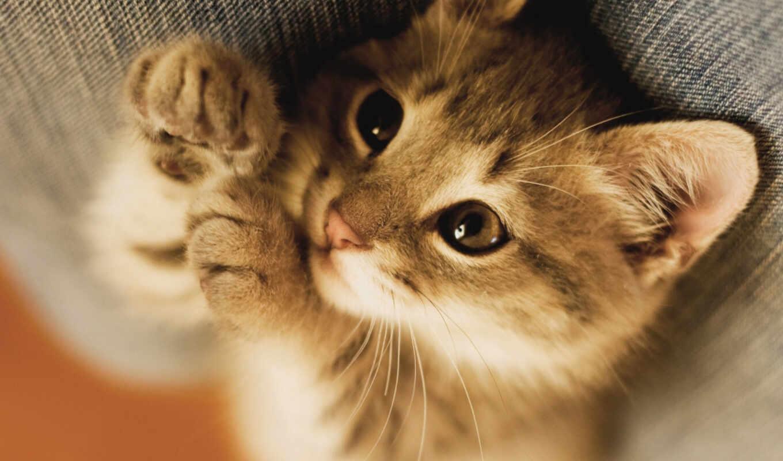 profile, котенок, фото, shared, кот,