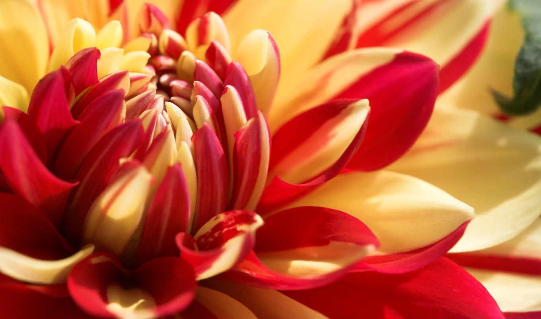 цветы, рыжие, просмотров,