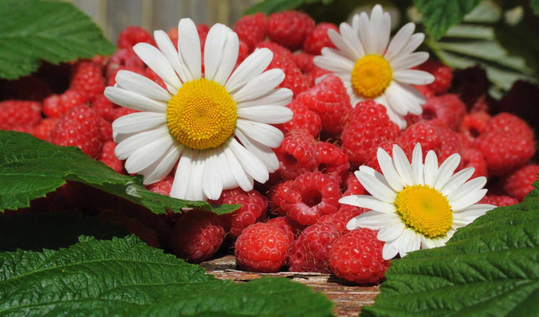 малина, ромашка, ягода