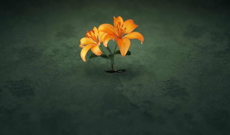 цветы, земля, зелёный