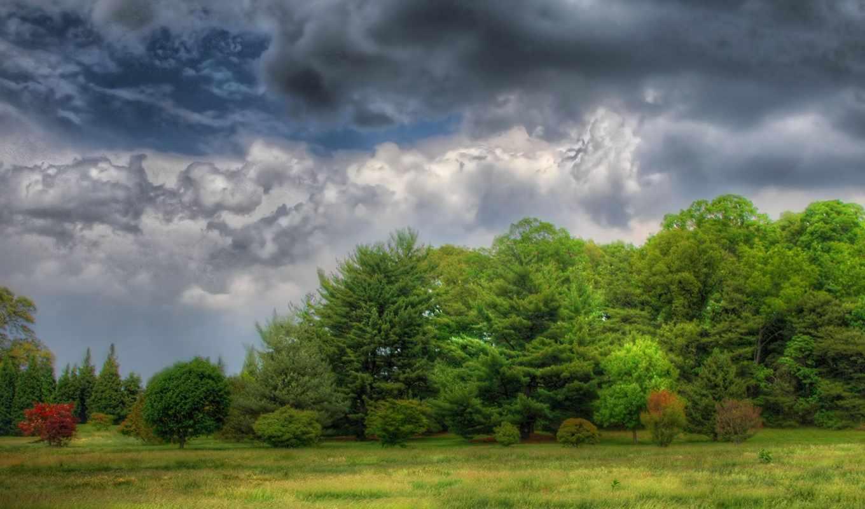 лес,облака,поляна