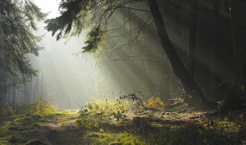 forest, лес, дремучий, wallpaper, to, деревья, вечер, утро, природа, дорога, лето, hd,