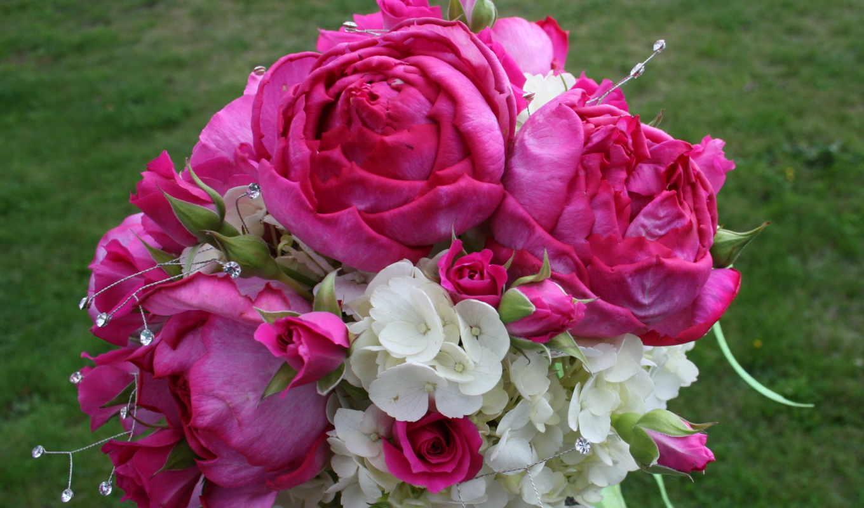цветы, букеты, гортензия, розы, розовый, roses, об, garden,