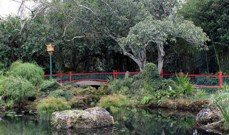 лес, качественные, фотографий, монитора, красивые, заставки, телефон, природа, категории,