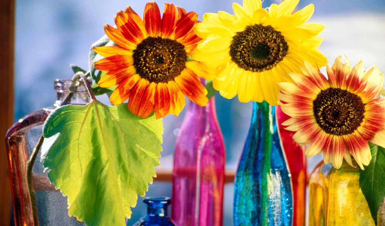 сорт, this, страница, design, principles, кб, sunflowers, flowers,