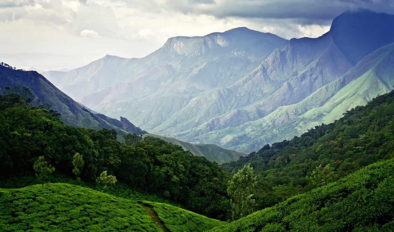 зелёный, плантации, чая, муннар, муннаре, landscape, чайной, тихий, холмы, vidhu, зеленые,