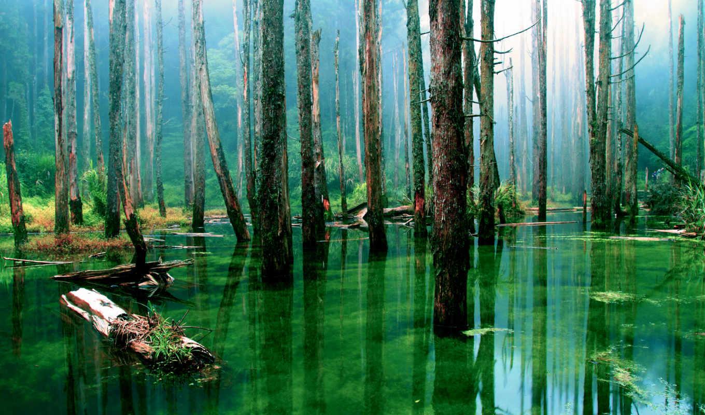 лес, деревя, коллекция, desktopwallpape, картинок, water, природа, картинка, тополя, ущелью,