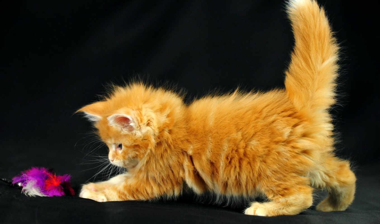 кот, играет, котенок, котэ, red, small, pussycat,