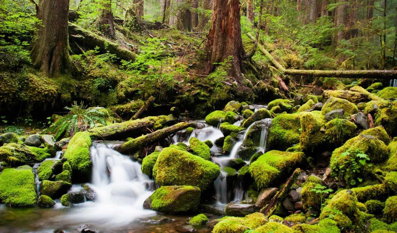 ручей, камни, мох, деревья, лес, река, чаща, duvar, природы, озера, реки, картинку, природа,