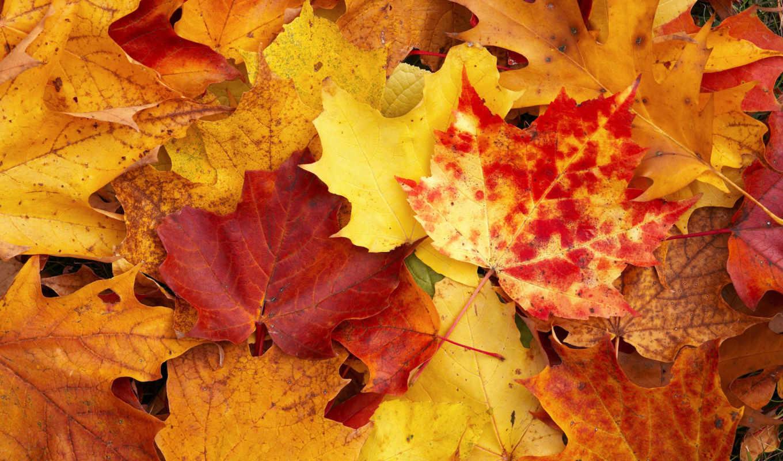 осень, желтый, листы, fall, природа, смотрите, ottobre,