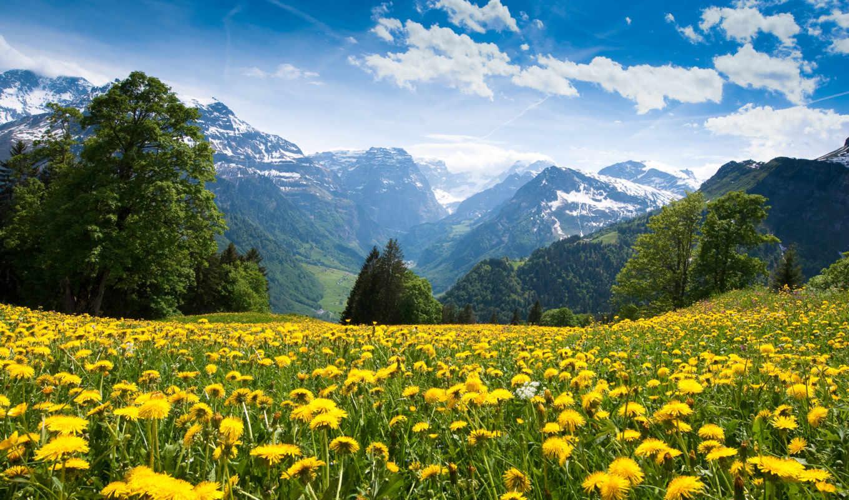les, альпы, горы, одуванчики, долина, vesna,