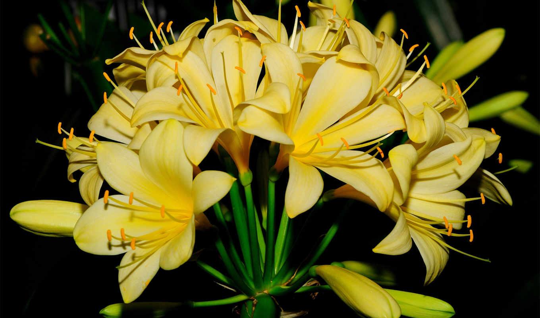 las, que, hoa, hành, más, distintas,