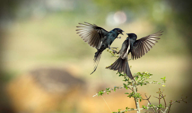 birds, full, животные, птица,