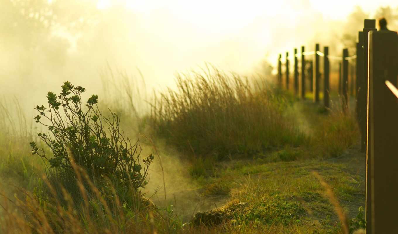 рассвет, sun, туман, утро, трава, деревья, зелёный, поле,