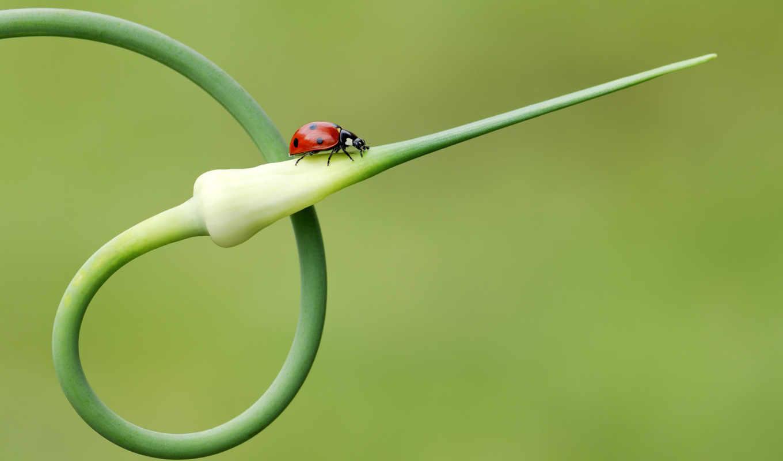 luke, лук, стрелок, бабочка, свой, how, стрелку, почвы, стрелки, идёт, севок, божья, коровка, насекомое,