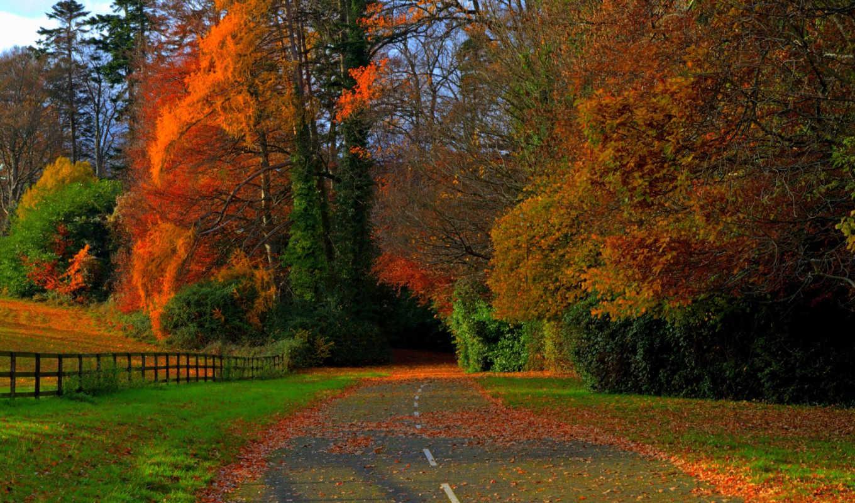 осень, дорога, листья, desktop, листьях, video, красные, поле, games, деревья,
