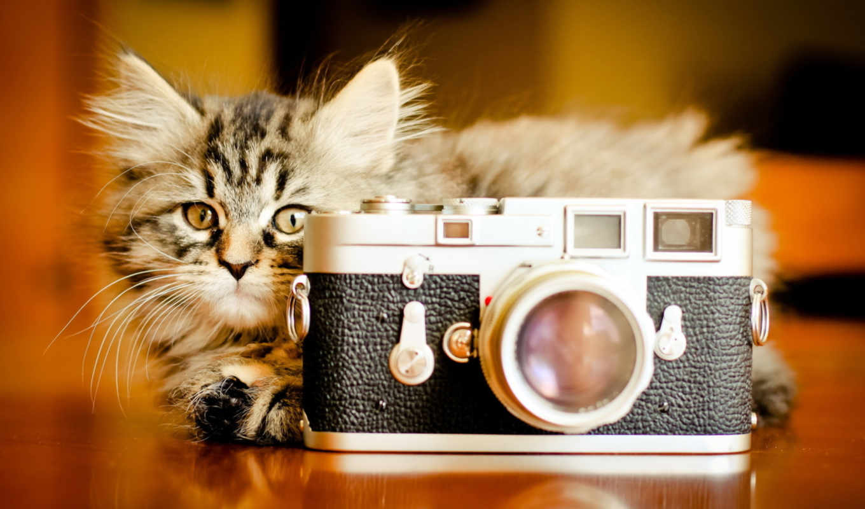 кошки, кот, котенок, zhivotnye, фотоаппарат,