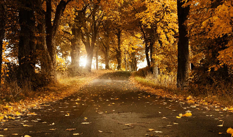 осень, золотая, world, природа, фото,