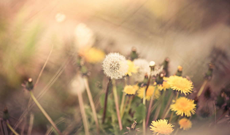 press, природа, трава, canoneos, flickr, hive, bokeh, mind,