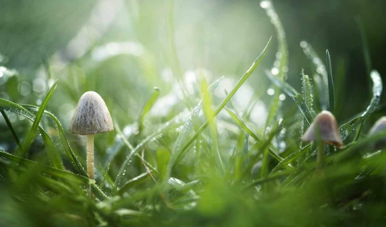изображение, трава, роса, drops, зелёный, капли, макро,