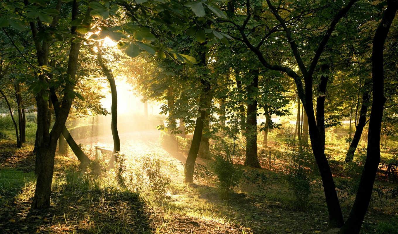 природа, красивые, pack, бесплатные,