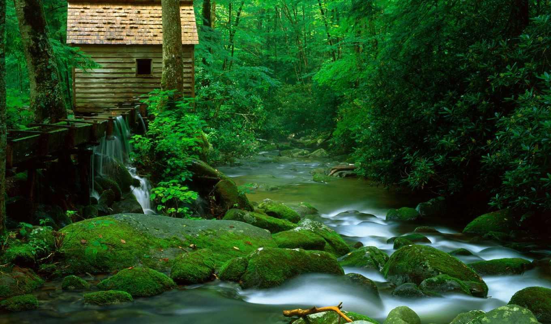 lodge, лесу, речки, фотографий, природа,