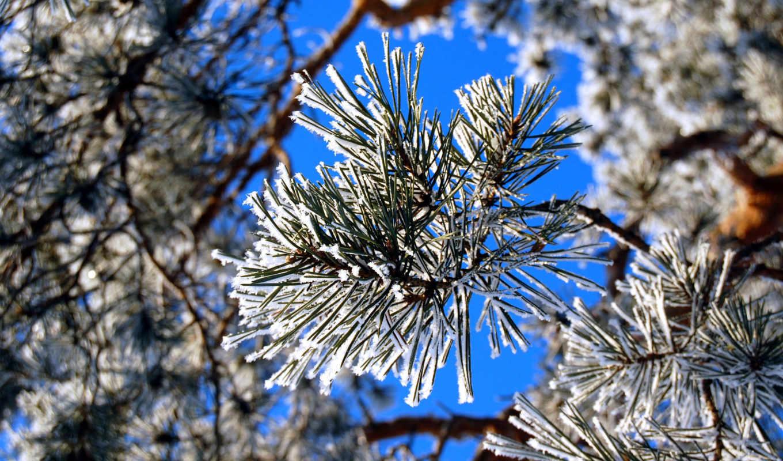 winter, дек, хорошее, настроение, подарит, коллекция, красивый, качественные, замечательный,