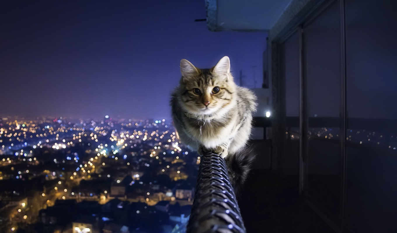 cat, hd, wallpaper, خلفيات, cats, house, night, can, walk, الصورة, anywhere, cityscapes, fotos, animals, القطط, wallpapers, اجمل, ipad, city,
