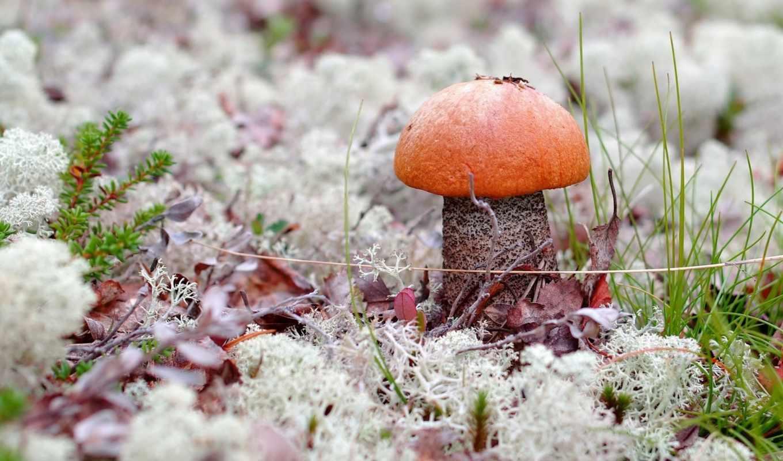 макро, трава, mushroom, мох, грибы,