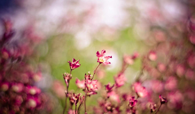 макро, цветы, розовый, картинка, поле, ветер,