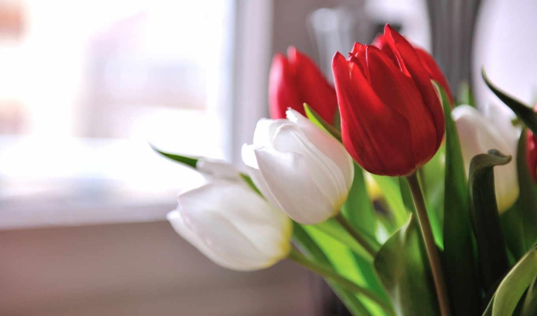 , тюльпаны, цветы, лепестки, весна, букет, рождения,
