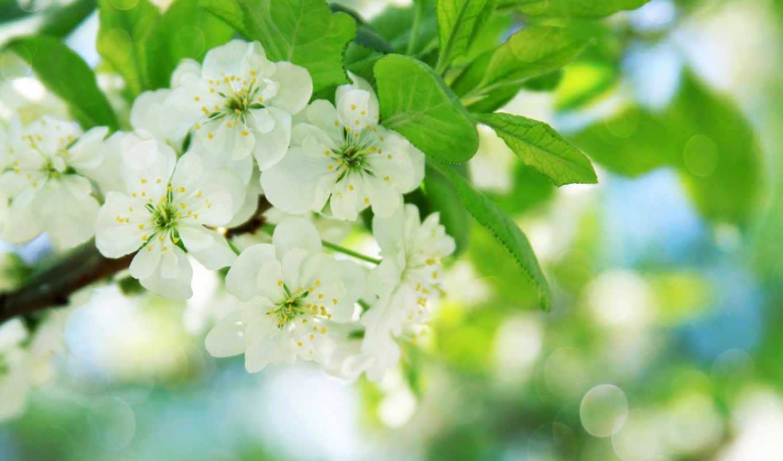 цветы, цветущая, февр,