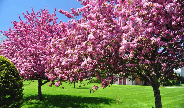 весна, февр, цветение, цветы,