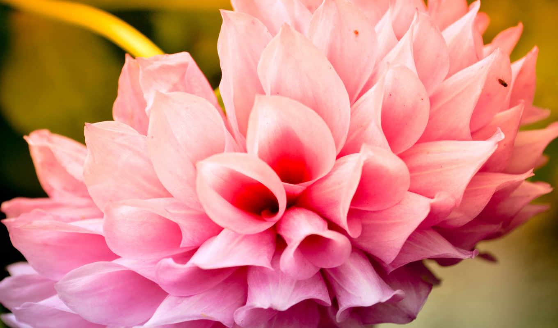 цветы, cool, flowers, free, this,