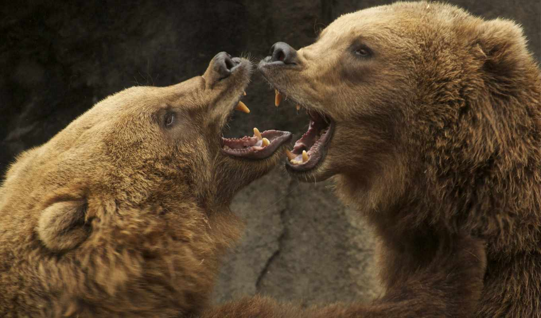 gryzli, niedzwiedzie, walka, zwierzeta, zwierzęta, grizzly, медведи, гризли, woda, bears, hewan,