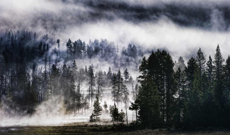 лес, туман, природа, mist, trees, foggy, landscape,