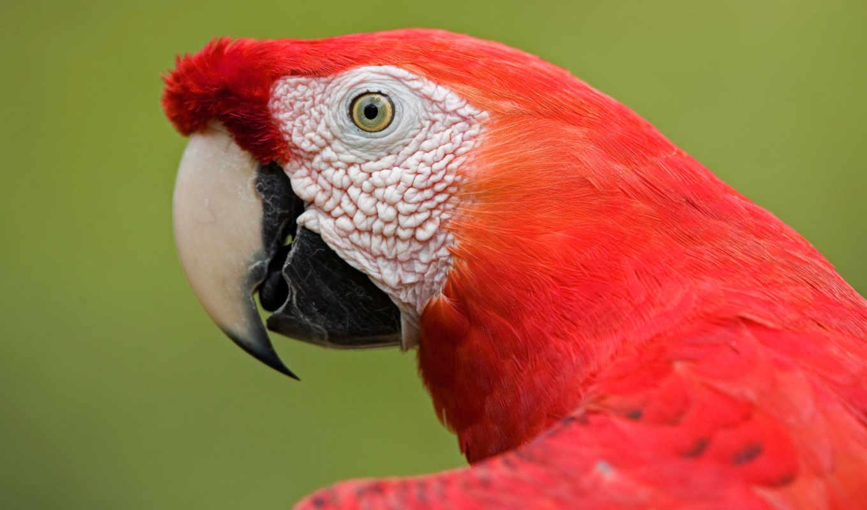 world, самый, birds, top, dodge, puzzle, птица,
