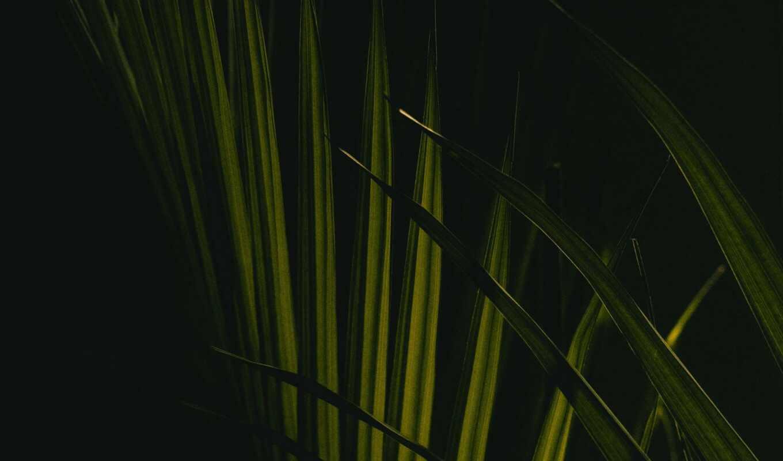 лист, palm, leaf, branch, телефон, mobile, планшетный, ноутбук, mac