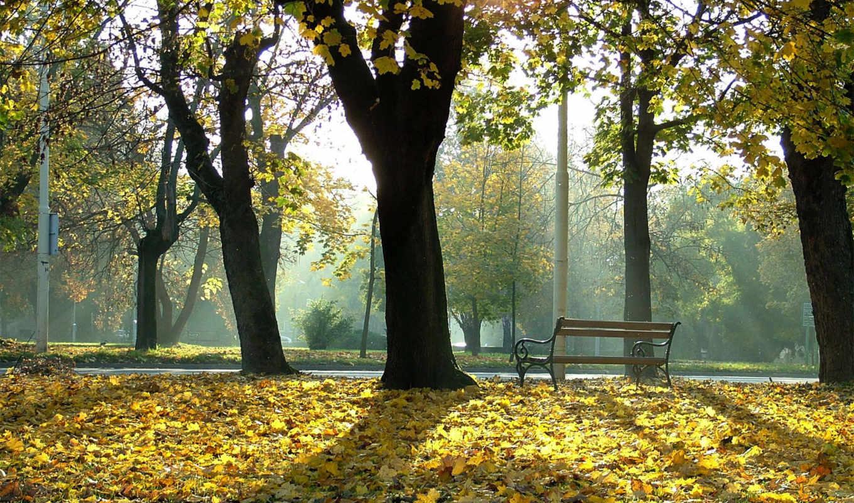 осень, размере, реальном, парке, скамейка, её, чтобы, картинку, обоями, природы, природа, просмотреть, лес, картинка, photo, you, золотистое, there,