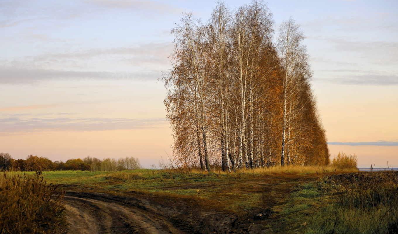 осень, березы, поле, картинка, рисунки, природа,